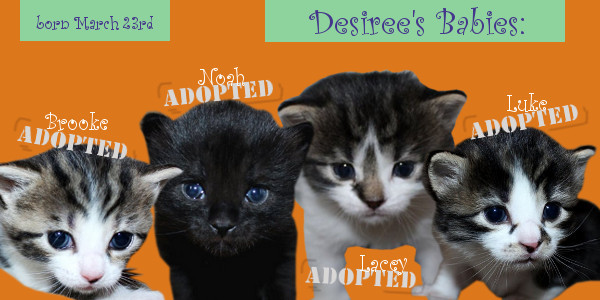 Kittens Adopted - Oasis Animal Rescue and Education Center, Oshawa, ON
