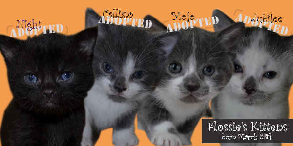 Flossie's kittens - all now adopted
