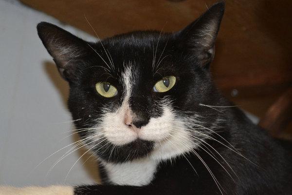 Adopt cat named Hemingway