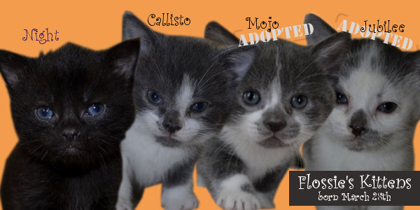 Flossie's Kittens for adoption