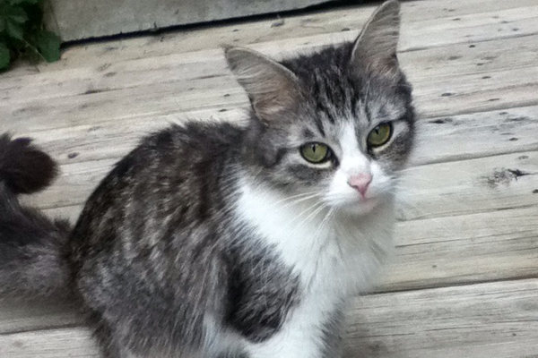 Kittie Kat - a cat for adoption at Oasis Animal Rescue