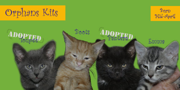 Kittens for adoption at Oasis Animal Rescue