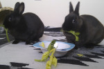 Rainbow And Daisy. Sociable Rabbits For Adoption