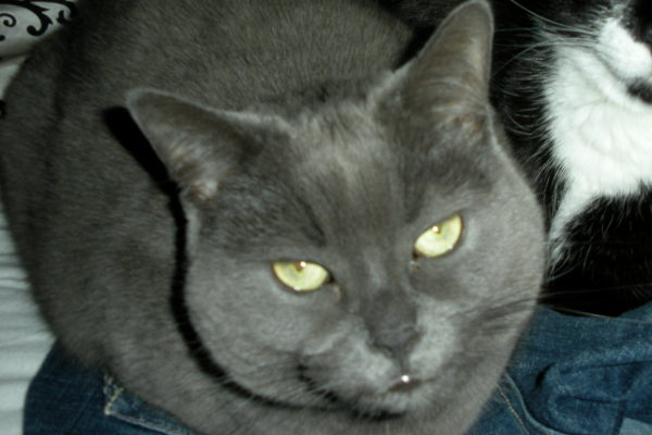 Shadow. Cat needs new home