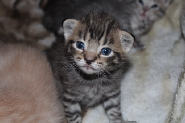 Kitten named Zoey for adoption