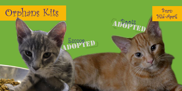 kittens adopted