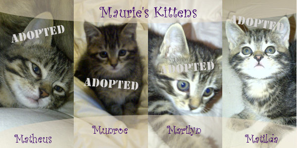 Maurie's Kittens All Now Adopted