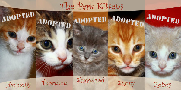 Park kittens for adoption. Oasis Animal Rescue.