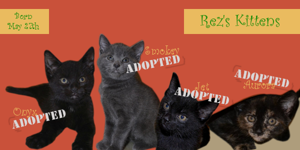Rez's Kittens all now adopted. Oasis Animal Rescue, Oshawa, ON