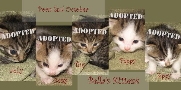 Bella's Kittens for adoption at Oasis Animal Rescue, Oshawa