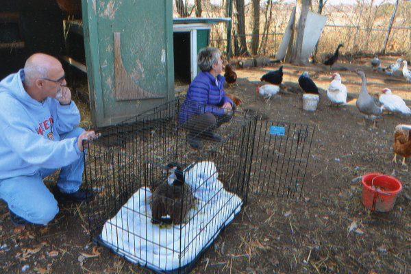 Sammy D. Goose meets new fowl friends. Oasis Animal Rescue.