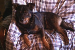 Thunder. Sociable Dog Finds Great New Home