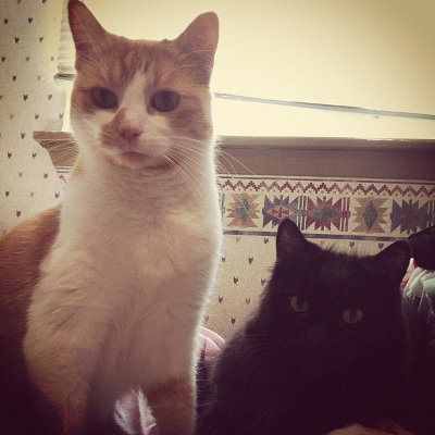 Darcy and Tucker are cats for adoption at Oasis Animal Rescue