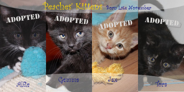 Peaches kittens all now adopted. Oasis Animal Rescue, Oshawa, ON