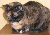 Mimi. A cat for adoption at Oasis Animal Rescue, Oshawa, Durham Region, Ontario