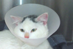Frozen Cat Olaf. Finds Loving, Permanent Home – UPDATE