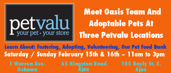 Oasis Animal Rescue visits Pet Valu in Oshawa and Ajax