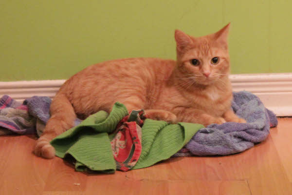 Rain, a stray cat now available for adoption at Oasis Animal Rescue