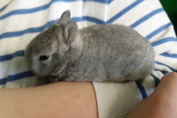 Baby rabbits for adoption at Oasis Animal Rescue, Oshawa, Ontario
