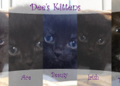 Dee's kittens for adoption. Oasis Animal Rescue.
