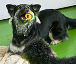 Lemon. Young dog for adoption. Oasis Animal Rescue, Ontario