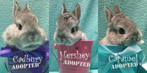 Baby Rabbits adopted through Oasis Animal Rescue, Durham Region, ON
