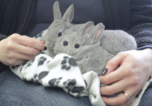 Rescue bunny naming contest winner announced, Oasis Animal Rescue, Oshawa