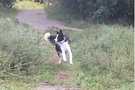 Levon. A dog for adoption at Oasis Animal Rescue, Durham Region