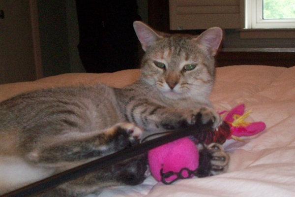 Princess. Wonderful cat for adoption. Oasis Animal Rescue, Durham Region