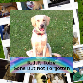 In Memory of Rainbow Bridge Pets