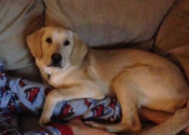 Toby. A dog for adoption at Oasis Animal Rescue, Durham Region, ON
