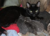 Mother cat Ninja and her kittens for adoption