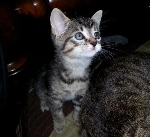 Baby Ruth - Kitten for adoption