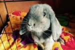 Daisy. Friendly Rabbit Finds Forever Home