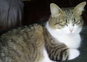 Ella. Lovely Cat Seeks Dog-Free Home