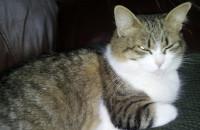 Ella. Cat for adoption at Oasis Animal Rescue, Durham Region