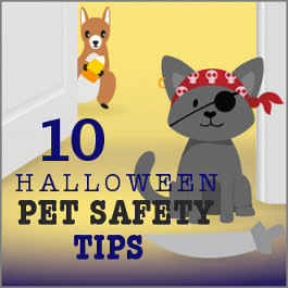 10 Halloween Pet Safety Tips