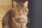 Love And Support Shown For Stray Cat Clark