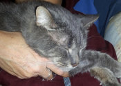 Jack. An adoptable cat at Oasis Animal Rescue