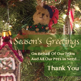 Season's Greetings From Oasis Animal Rescue