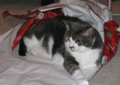 Stampy. A cat for adoption. Contact Oasis Animal Rescue.