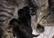 Rachel's kittens for adoption. Oasis Animal Rescue