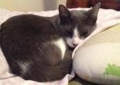 Daytona. Cat for adoption. Oasis Animal Rescue
