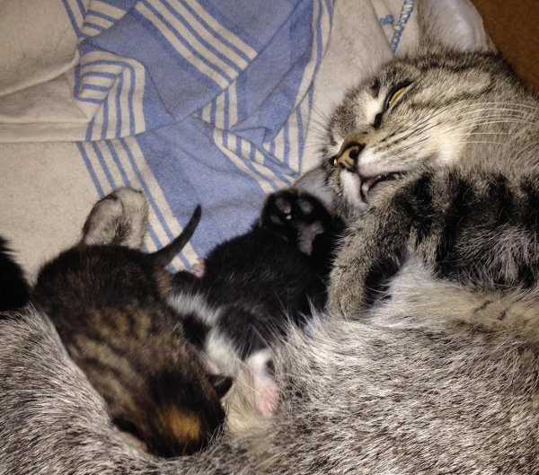 Cat Rachel Adopts Two More Kittens. Oasis Animal Rescue