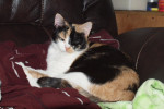 Brandie. Stunning, Sociable Rescue Cat Seeks New Home