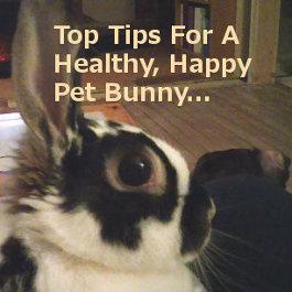 Top Tips For A Healthy, Happy Pet Bunny