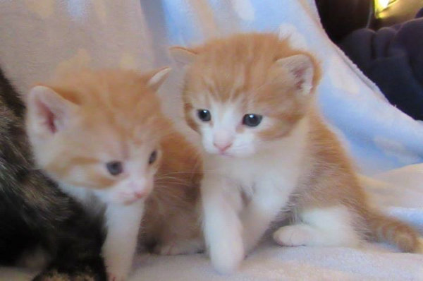 Joey And Sandi. Adopted Kittens. Oasis Animal Rescue