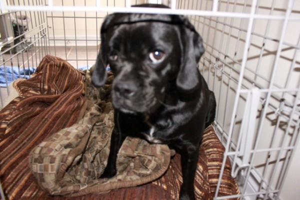 Shiloh. Dog for adoption. Oasis Animal Rescue