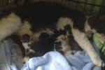 Breaking News!! Molly's Five Kittens Have Arrived