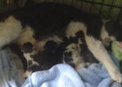 Molly's Kittens born. Adopt a kitten